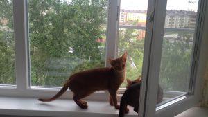 Антикошка на окне, а кошки на подоконнике