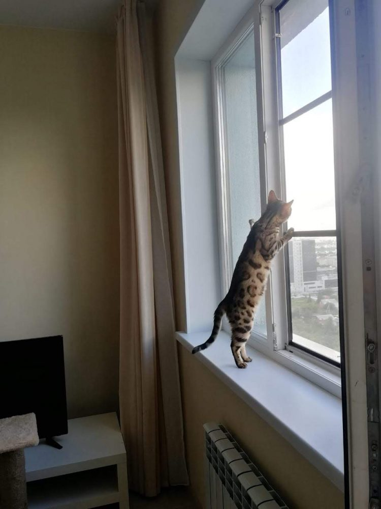 """Сетка """"Антикошка"""" установленная на окно"""