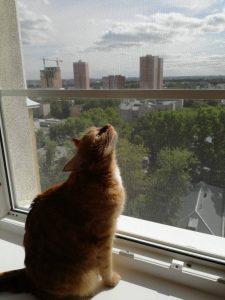 Кошка смотрит на Антикошку